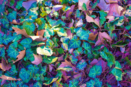 Forest Leaves in Vibrant Surreal Bold Holographic Colors. Concept art. Surrealism Background.