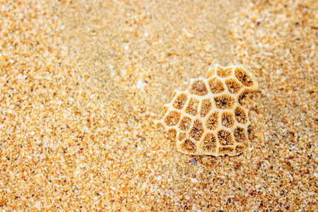 A Little Coral Rock on Brown (White) Sea Sand. Coral Rock on Indonesia Sea Sand