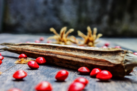Dried Okra Seed on Black Wood With Red Hard Seed and tiliaceum Seed Stock Photo