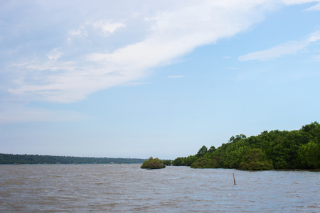 Bay Water, Mangrove Trees and Blue Sky With White Cloud