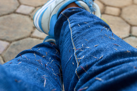 The Weed Seed Stuck on Blue Jean. Close Up of Weed Seed Stuck on Blue Jean. Stock Photo - 101024089