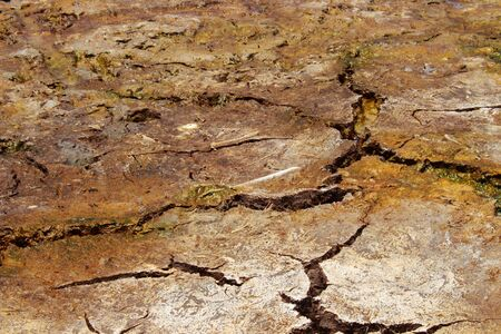 Close Up Brown Dry and Cracked Soil Background at Low Angel