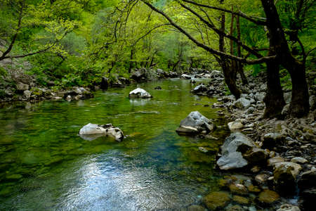 A transparent mountain river flow between stones and green trees