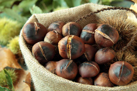 CHESTNUT ROAST IN JUTE BAG WITH LEAVES AND RICCI