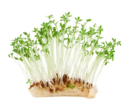 Garden cress ( Lepidium sativum) isolated on white background Stock Photo