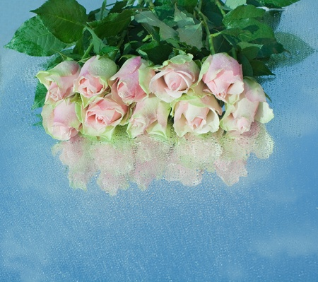 Pink roses on a mirror with sky reflection. Drops. photo