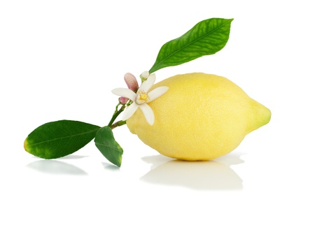 Lemon on a branch with leaves and a flower.  Isolated on a white background.