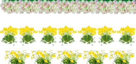 flowers roses and  oxalis (l. oxalis lobata ) making a border.isolated on a white background.  photo