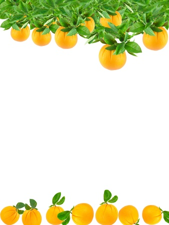 Oranges growing on a tree and fallen making a border.Isolated on a white