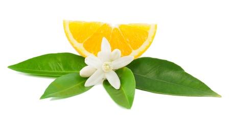 navel orange: Orange,  leaf, flower and slice  Isolated on a white background