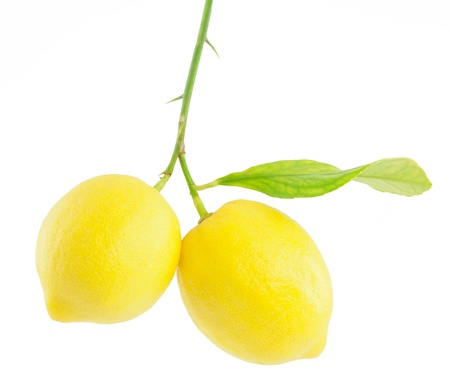 Lemon op een tak met blad, op een witte achtergrond