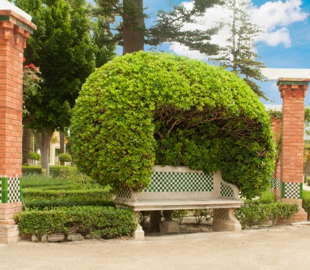 topiary:  Bench from a stone in a topiary garden
