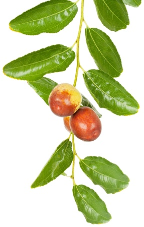 jujube fruits: jujube fruit  (or Chinese date or Ziziphus zizyphus )  on branch with leaves  isolated on white background Stock Photo