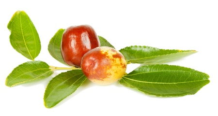 jujube fruit  (or Chinese date or Ziziphus zizyphus )  on branch with leaves  isolated on white background photo