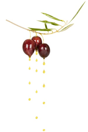 drops of oil from two black olives on branch isolated on a white background