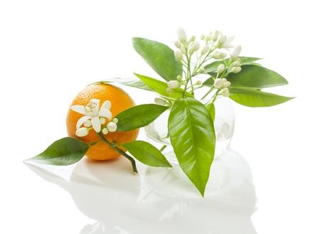 Frutta arancione con fiore e fiore in un vaso rotondo di vetro trasparente sul bianco