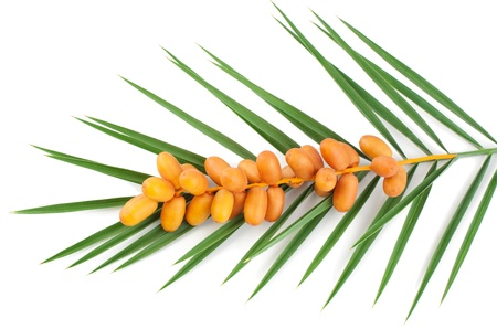date palm tree: A bunch of fresh date fruits with palm leaf isolated on white background   Stock Photo
