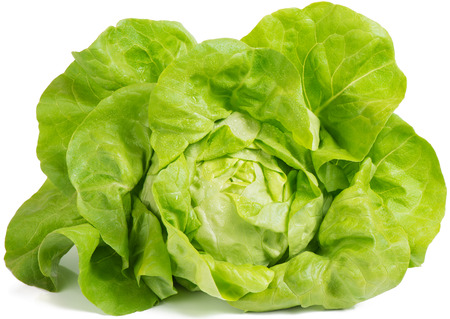 lactuca: Fresh lettuce salad leaves bunch isolated on white background  Stock Photo