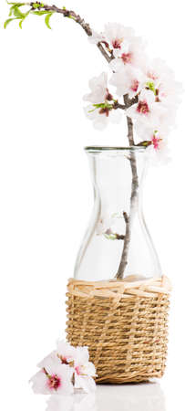 twig of blossoming almonds  in bottle, isolated on white  photo