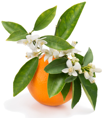 Orange fruit with leaves and blossom isolated on a white background Reklamní fotografie - 27274619