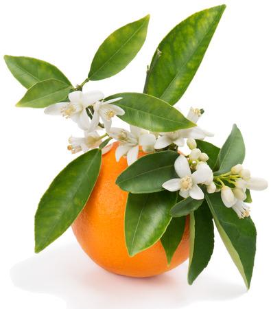 Oranje fruit met bladeren en bloesem geïsoleerd op een witte achtergrond Stockfoto