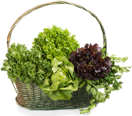 lactuca: Big basket of fresh several types of lettuce and celery.