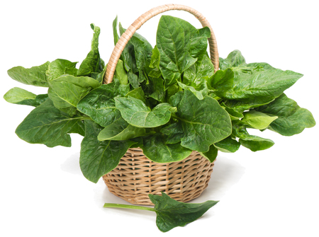 Fresh leaves of spinach in basket on white  photo