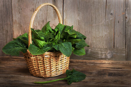 A wicker basket with a handle full of fresh  spinach over wooden background.