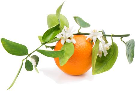 Frutta arancione su un ramo con foglie e fiore isolato su uno sfondo bianco
