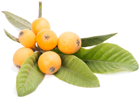 Loquats on a branch with leaves isolated on a white background