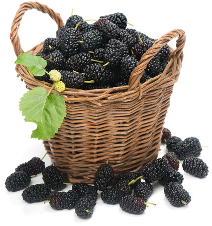 wicker basket with black mulberries isolated on white