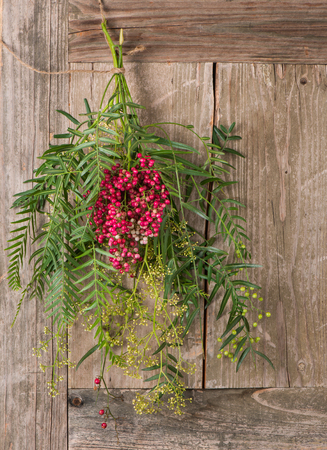 peppertree:  Branch of the peruvian pepper tree laden with flowers, pink and green peppercorns, on wooden background. Stock Photo