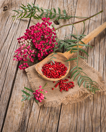 peppertree: red peppercorns on a twig and dry in a wooden spoon on a wooden table