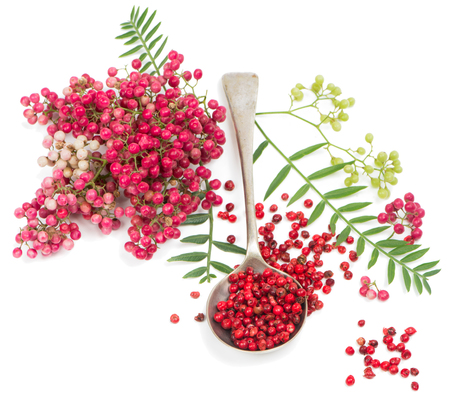 peppertree:  Pink peppercorns in a spoon and twigs of peruvian pepper tree isolated on white background  Stock Photo