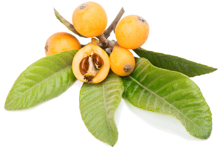 Loquat fruits on a branch with leaves and seeds isolated on a white background