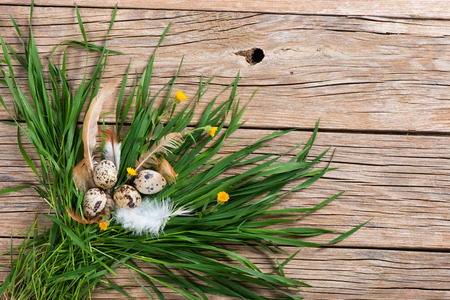quail eggs in the grass with yellow flowers on wooden background, top view