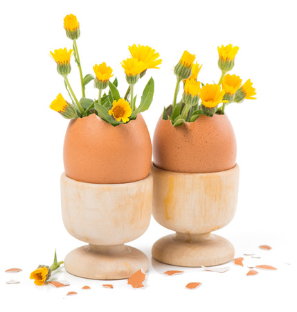 eggs with spring flowers in wood eggcups isolated on white photo