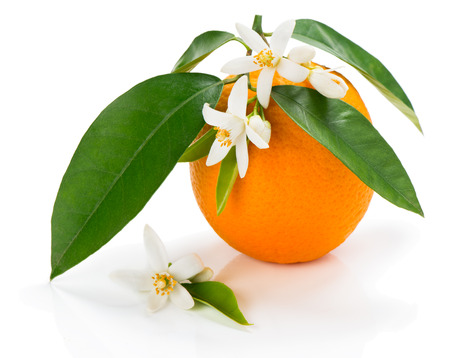 Orange fruit with leaves and blossom isolated on a white background 版權商用圖片 - 38794952