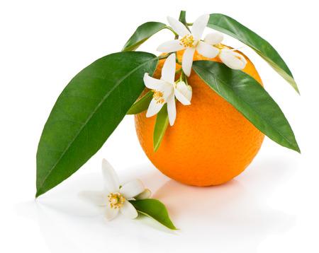 Oranje fruit met bladeren en bloesem geïsoleerd op een witte achtergrond Stockfoto - 38794952