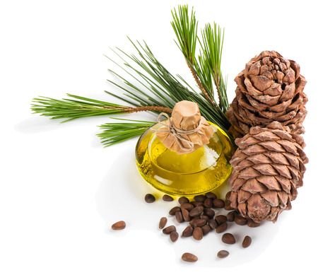 siberian pine: Bottle of cedar oil, cones and nuts isolated on white background Stock Photo