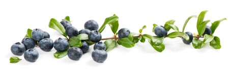 ripe: Blueberries with green leaves  isolated on white background