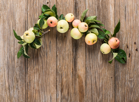 manzana verde: Apples on apple tree branches on a rustic wooden background, top view