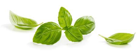 albahaca: Ramita y las hojas de albahaca fresca aislados en fondo blanco
