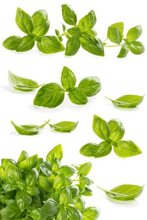 albahaca: Conjunto de albahaca fresca verde deja aislada sobre fondo blanco. Collage.