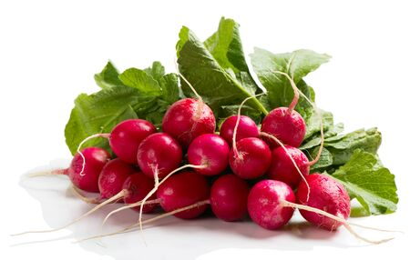fascicle: Bunch of red radish isolated on white background