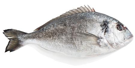 dorada: Raw dorada fish isolated over the white background