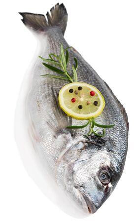 dorada: One fresh dorada fish decorated with lemon, pepper and rosemary isolated on white background