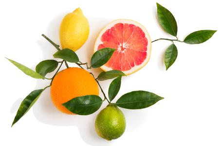 Vista superior de cítricos (pomelo, naranja, limón, lima) en una rama con hojas verdes aisladas sobre fondo blanco.