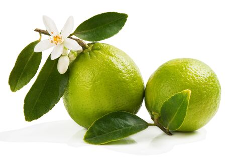 citrus: Two limes with blossom and green leaves isolated on white background.