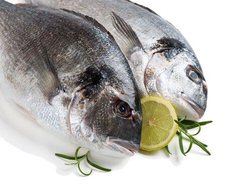 dorada: Two fresh dorada fishes with lemon isolated on white background. Stock Photo